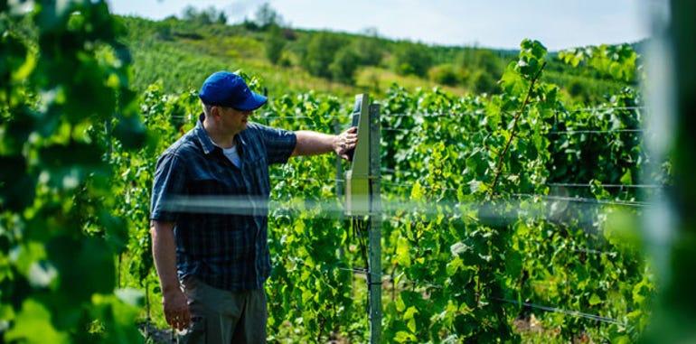 151020-vineyard-620.jpg
