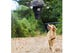 The drone will walk your dog for you