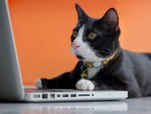 What... you didn't waste mobile data usage on a cat?