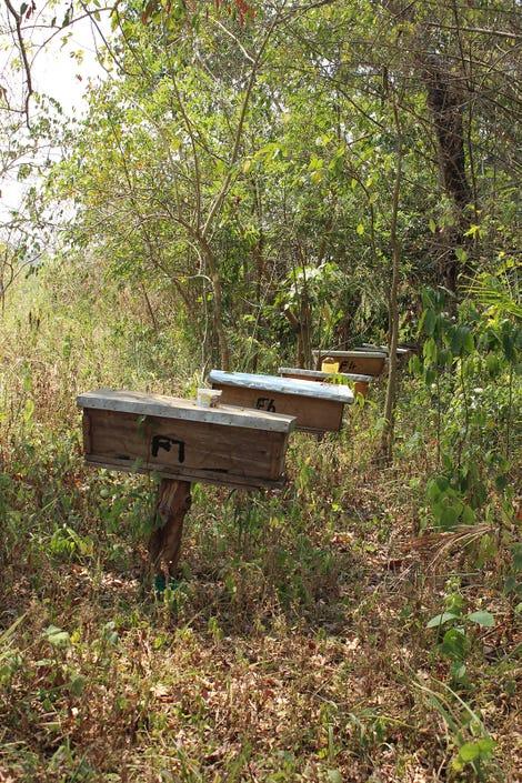 bee_hives.jpg