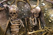 Skeletons. CC BY-SA 3.0 http://en.wikipedia.org/wiki/File:S%C3%A9pulture_de_Teviec_(5).jpg