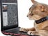 Nokia's Cat tracking