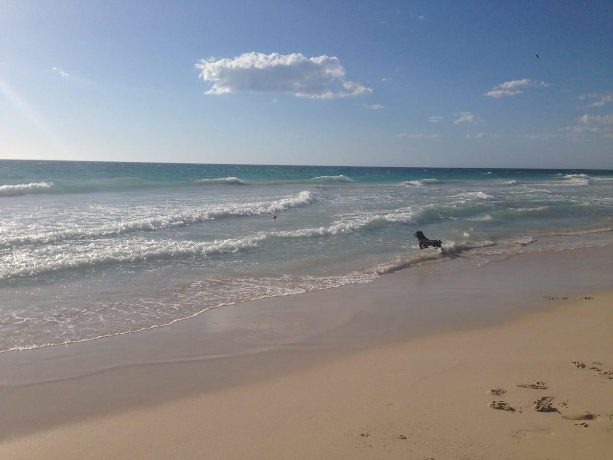 beach-perth-western-australia-dog.jpg