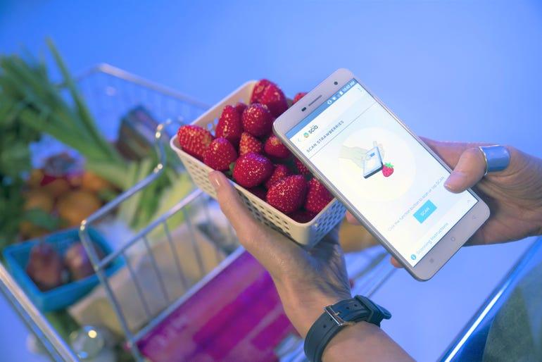 scanning-strawberries.jpg