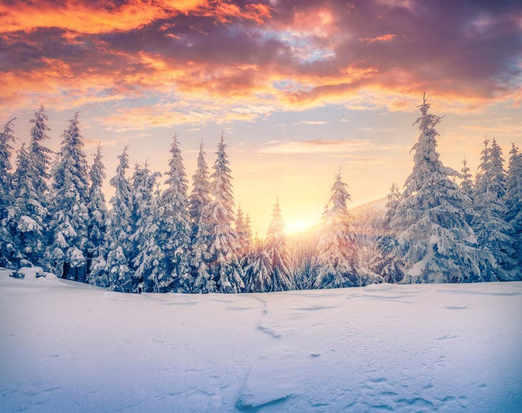Sunrise in a mountain forest