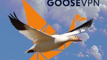 goose3.jpg