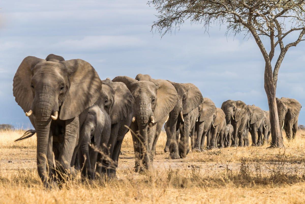 herd-of-elephants.jpg