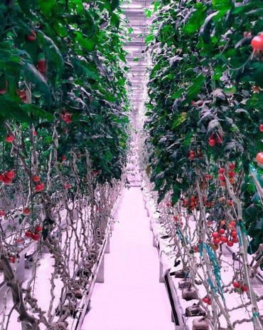 Automated indoor farm