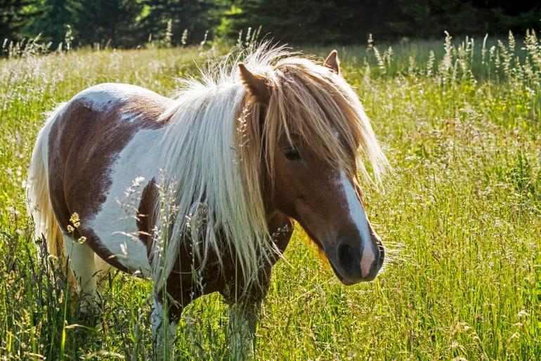 istock-pony.jpg