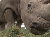 IoT wildlife protector used to fight African poachers
