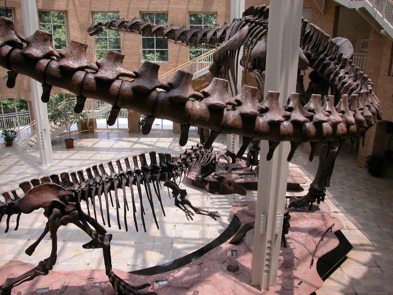 Giants of the Mesozoic dinosaurs