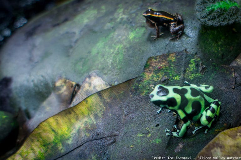 Frogs-1