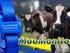 Moo Monitor