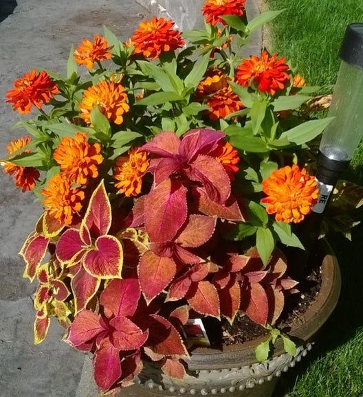 Nokia Lumia 625 flower pot 2