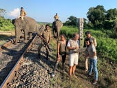 Elephants vs trains: This is how AI helps ensure they don't collide