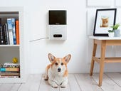 Can't bring your pet to work? Stay connected with this smart tech