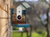 Backed to Business: Watching birds and tracking the rat race