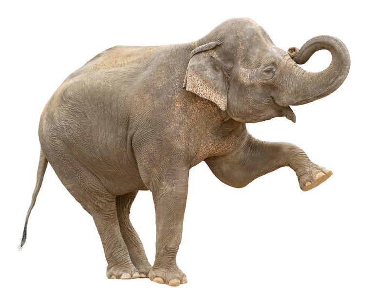 elephant-greeting-hadoop.jpg