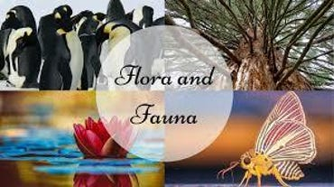 flora-and-fauna.jpg