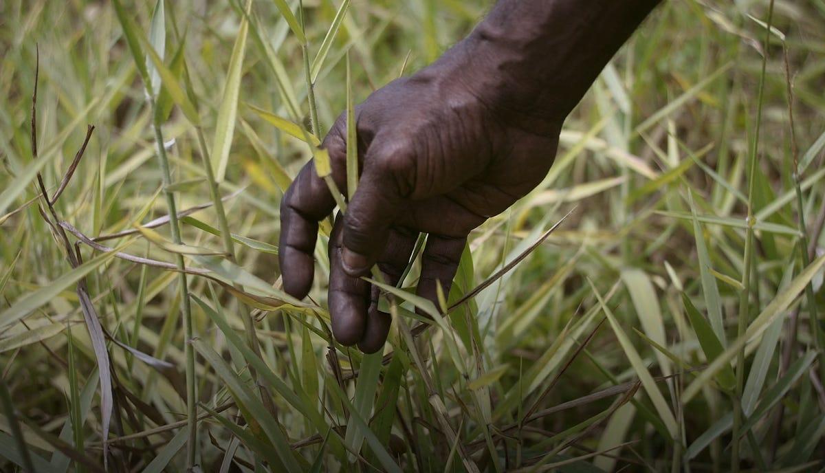 kakadu-healthy-country-microsoft-drone-grass-ranger.png