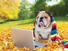 On the internet, now everybody knows you're not a dog