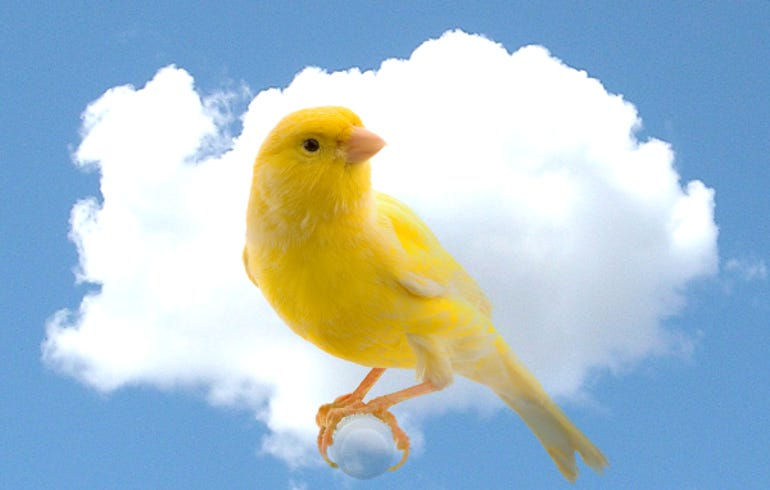 canary-cloud