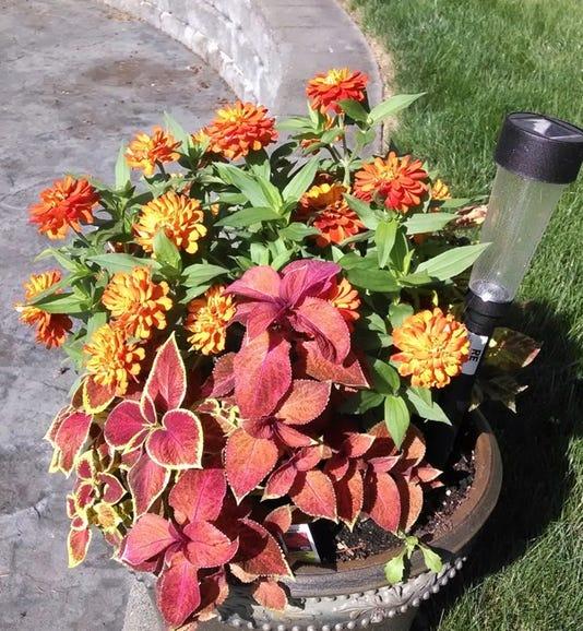Moto X flower pot 2