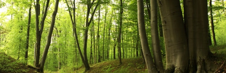forest-trees-woods