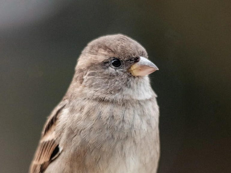 30,000 Macs infected with new Silver Sparrow malware | ZDNet