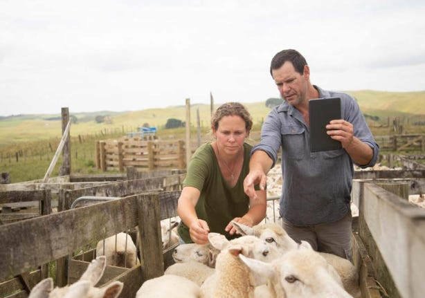 spark-new-zealand-sheep-tablet.png