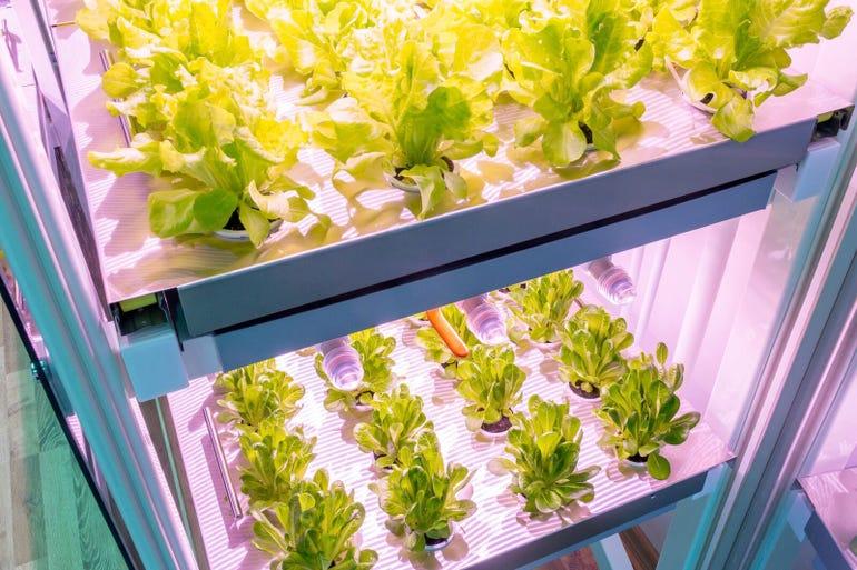 clickgrowsmartfarm.jpg