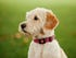 PitPat wearable activity tracker for dogs