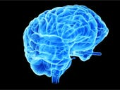 Your brain might be more digital than analog, scientists claim