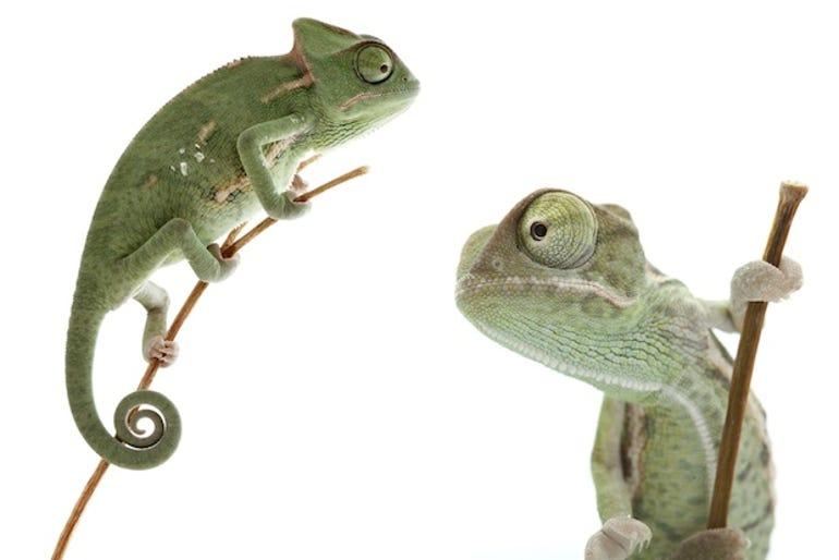 chameleon-thumb.jpg