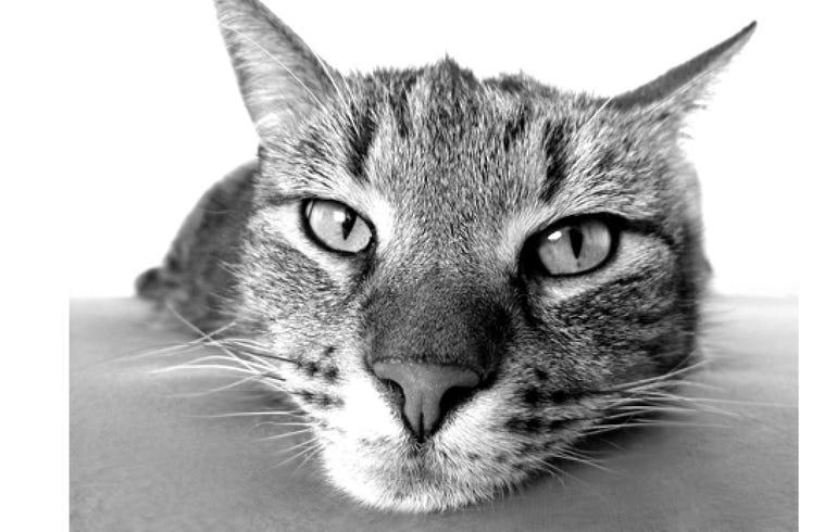 Cat DNA testing