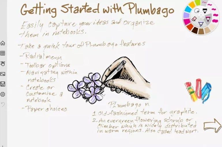 plumbagowindows.jpg