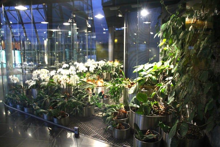The flower room
