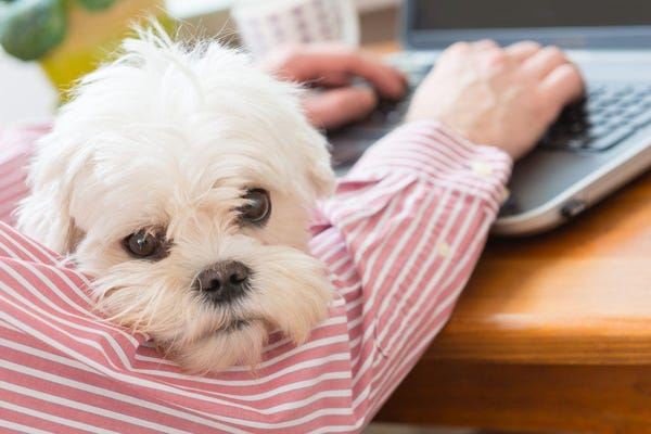 Work from home? Things I wish someone had told me before I started