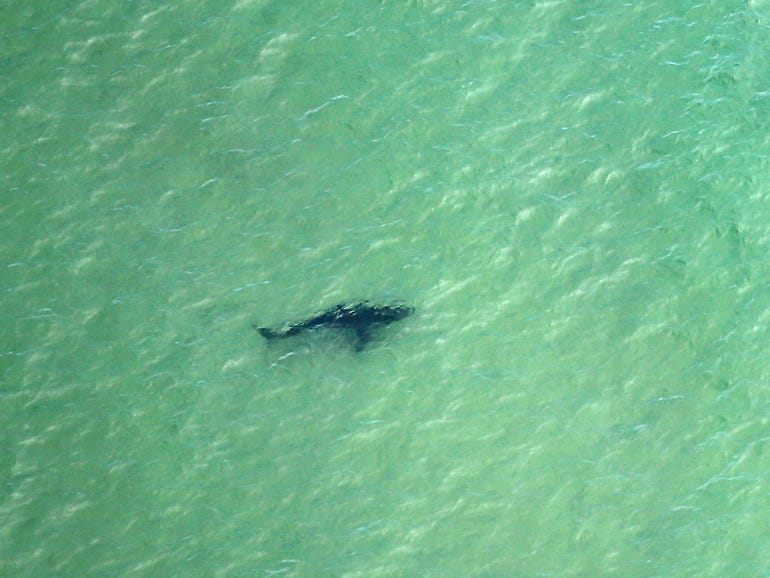 More shark-spotting drones and drumlines added to NSW coastlines for AU$21.4 million