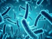 How bacteria could improve soft robots