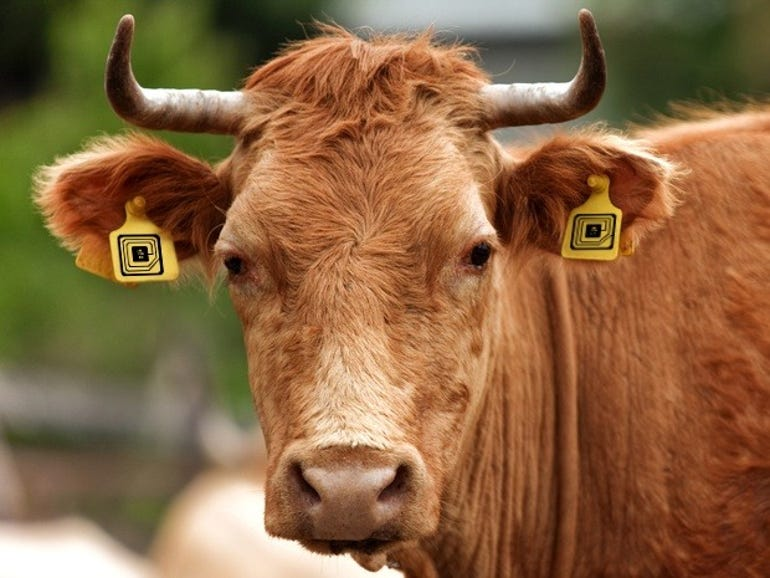 Pay heed internet Third Wave Cows of Disruption