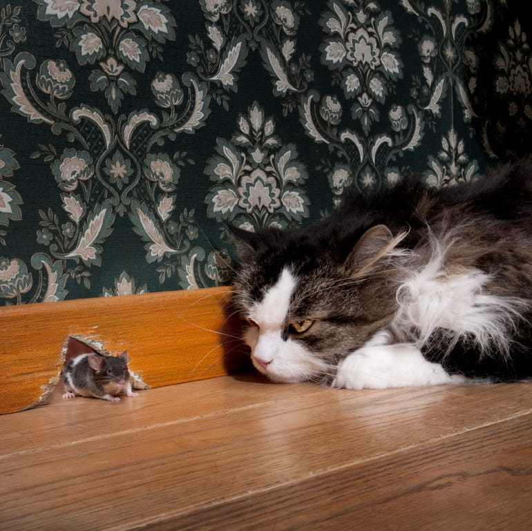 cat-and-mouse.jpg