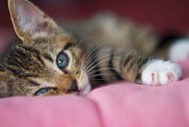 cute-kitten-cat-photo-flickr.jpg