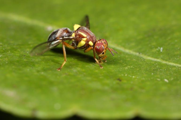 rapidaim-fruit-fly.jpg