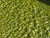 How algae is becoming much more than pond scum