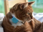 Tabcat review: an accurate pet locator with no need for a smartphone app