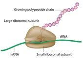 microservers-ribosome
