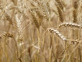From farm to plate via blockchain: Solving agriculture supply chain problems one grain at a time