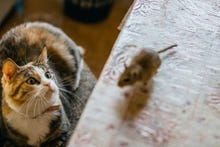Mysterious cat-and-mouse-themed Trojan RAT is potentially dangerous, but its creators and purpose remain unclear