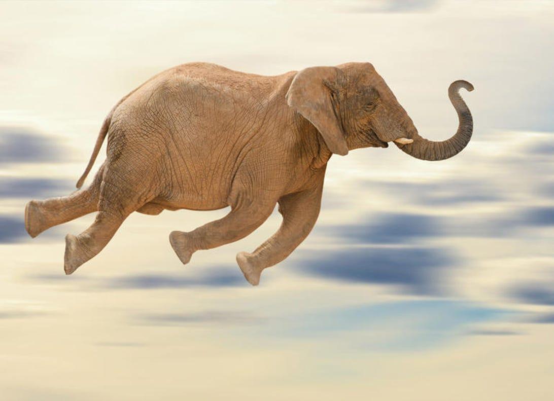 flying-elephant.jpg